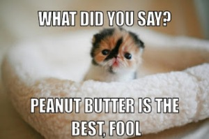 cutest-kitten-meme-generator-what-did-you-say-peanut-butter-is-the-best-fool-6c6997